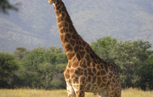 Passer d'agréables vacances en famille en Namibie