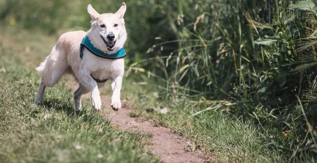 Adoption d'un chien du point de vue juridique