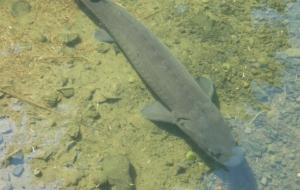 3 anecdotes sur les poissons sauvages